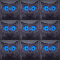 Паша Proorok - Хочу быть котом
