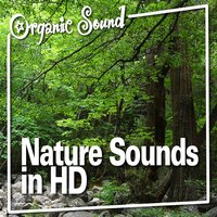 Nature Sounds in Hd — Organic Sound