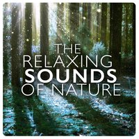 The Relaxing Sounds of Nature — Natural Sounds, Nature Sound Collection, Natural Sounds|Nature Sound Collection|Nature Sounds