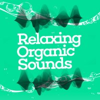 Relaxing Organic Sounds — сборник