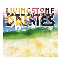 Waiting On the Last Minute — Livingstone Daisies