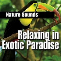 Relaxing in Exotic Paradise — Звуки природы