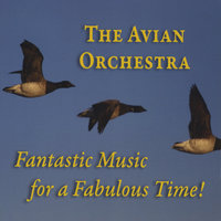 The Avian Orchestra: Fantastic Music for a Fabulous Time — сборник