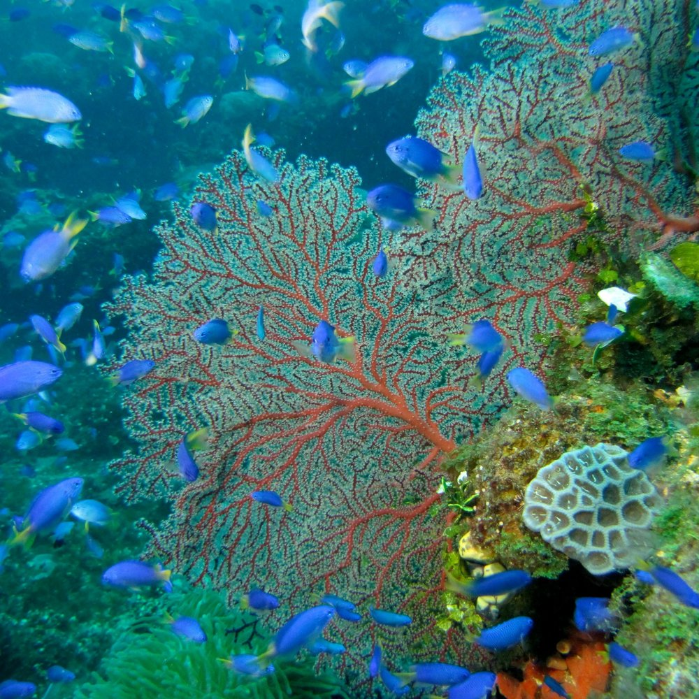 coral reef zoology