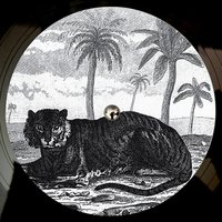 Try the Impossible EP — Tigerskin