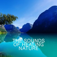 The Sounds of Healing Nature — The Healing Sounds of Nature