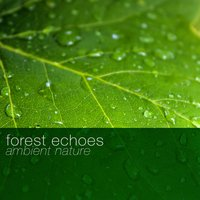 Forest Echoes: Ambient Nature — Natural Forest Sounds