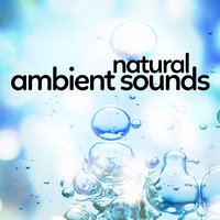 Natural Ambient Sounds — Outside Broadcast Recordings, Nature Sound Series, Nature Sounds 2015, Sounds of Nature White Noise for Mindfulness Meditation and Relaxation, Sounds of Nature White Noise for Mindfulness Meditation and Relaxation|Nature Sound Series|Nature Sounds 2015