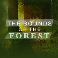 The Sounds of the Forest — Forest Sounds