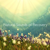 Natural Sounds of Recovery — Sounds of Nature Relaxation