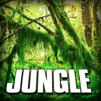 Jungle (Nature Sound) — Sounds Of The Earth