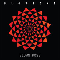 Blown Rose — Blossoms