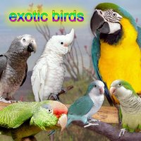 Exotic Birds — Bird Sounds