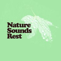 Nature Sounds Rest — Rest & Relax Nature Sounds Artists