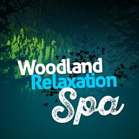 Woodland Relaxation Spa — Forest Sounds Relaxing Spa Music Singing Birds