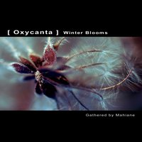 OXYCANTA - Winter Blooms — Mahiane