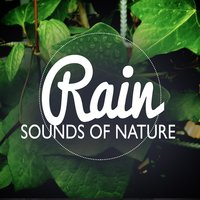 Sounds of Nature: Rain — Baby Sleep, Thunderstorm Sleep, Sounds Of Nature : Thunderstorm, Rain, Baby Sleep|Sounds Of Nature : Thunderstorm, Rain|Thunderstorm Sleep