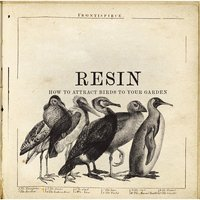How to Attract Birds to Your Garden — Resin
