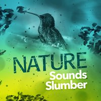 Nature Sounds Slumber — Nature Sounds Sleep