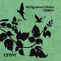 Crow — The Blackberry Bushes Stringband