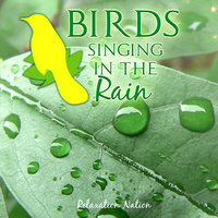 Birds Singing in the Rain — Relaxation Nation