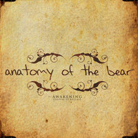 Awakening — Anatomy of the Bear