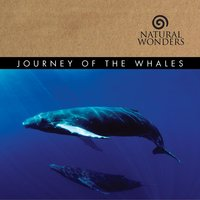 Journey Of The Whales — David Arkenstone