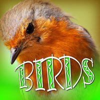 Birds — Sound Effects Library