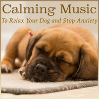 Calming Music to Relax Your Dog and Stop Anxiety — RelaxMyDog, Relax My Puppy, Dog Music Dreams