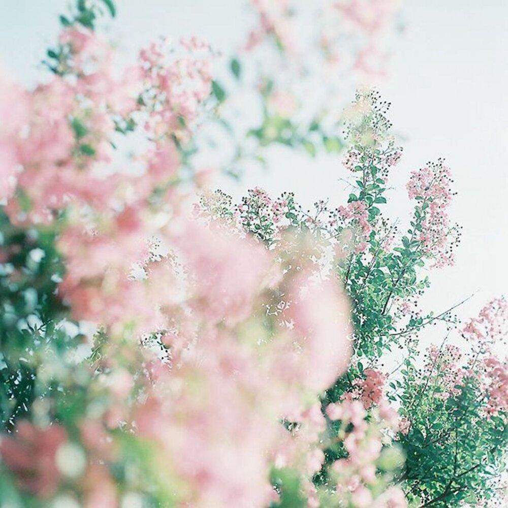 красивые картинка в пастельных тонах