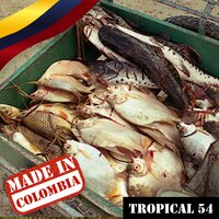 Made In Colombia / Tropical / 54 — сборник