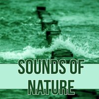 Sounds of Nature – Serenity Lullabies with Relaxing Nature Sounds, Insomnia Therapy, Sleep Music to Help You Relax — Lovely Nature Music Zone