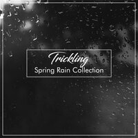 #14 Trickling Spring Rain Collection — Thunderstorms & Rain Sounds, Relaxing Nature Sounds Collection, Sleep Sounds Rain