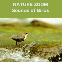 Sounds of Birds — Nature Zoom