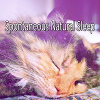 Spontaneous Natural Sleep — Monarch Baby Lullaby Institute