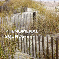 Phenomenal Sounds for Meditative Healing — Healing Meditation Zone