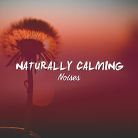 #21 Naturally Calming Noises for Sleep and Relaxation — Deep Sleep Relaxation, Meditation Relaxation Club, Lullabies for Deep Meditation