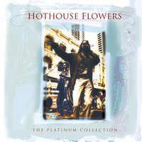 The Platinium Collection — Hothouse Flowers