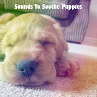 Sounds To Soothe Puppies — Baby Lullaby, Baby Sleep Through the Night, Lullaby Land
