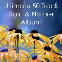 Ultimate 50 Track Rain & Nature Album — Rain Sounds, Rain Sounds & Nature Sounds, Nature Sounds Nature Music