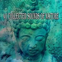 40 Collected Sounds Of Nature — Sound Library XL