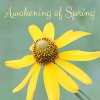 Awakening of Spring — Rain Sounds