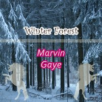 Winter Forest — Marvin Gaye