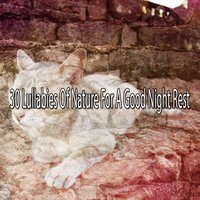 30 Lullabies Of Nature For A Good Night Rest — Einstein Baby Lullaby Academy