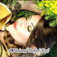 A Natural Perfect Rest — Deep Sleep Relaxation, All Night Sleeping Songs to Help You Relax, Trouble Sleeping Music Universe