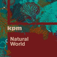 Natural World — Anthony Phillips, James Collins, Martin Robertson, Anthony Phillips|James Collins|Martin Robertson