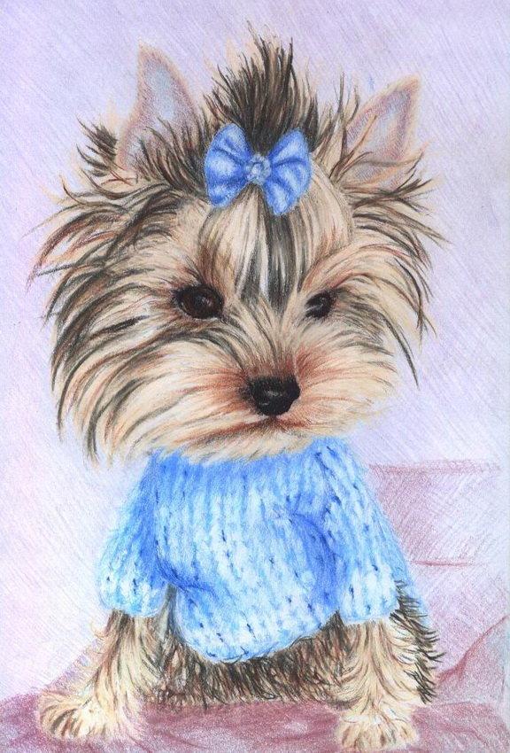 Картинки йорка щенка для срисовки
